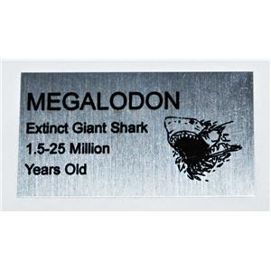 MEGALODON Tooth Fossil Extinct Shark Metal Display Label #10662 2o