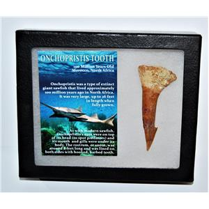 Onchopristis Tooth Fossil 100 Mil Yr Old 2.962 inch w/ Display Box LDB 14014 8o