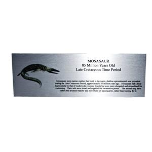 Large Mosasaur Metal Display Label for Fossils #10709 2o