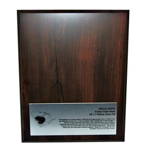 MEGALODON TOOTH Display Stand for Shark Tooth -TOOTH NOT INCLUDED #10249 16o
