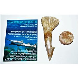 Onchopristis Vertebra & Tooth Fossil 3 1/2 inches 100 MYO 14542 5o