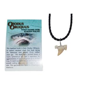 OTODUS Shark Tooth Necklace Genuine Fossil 1/2 to 3/4 inch  #10018 2o