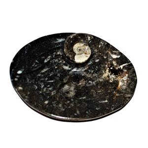 Soap Dish Carved out of  Fossil Rock Black Oval #10519 13o