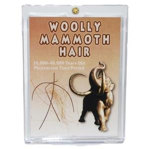 WOOLLY MAMMOTH Genuine Hair w/ COA PLEISTOCENE for Fossil Collectors #10187 5o