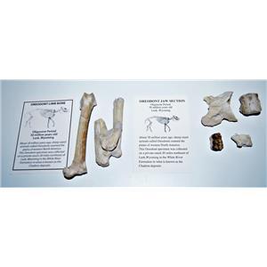 Oreodont Fossil Lot Limb Bone, Teeth, Vertebrae 30 Mil Yrs Old Mammal #14608 7o
