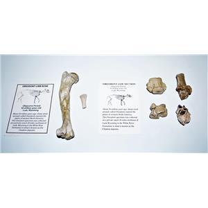 Oreodont Fossil Lot Limb Bone, Teeth, Vertebrae 30 Mil Yrs Old Mammal #14616 7o