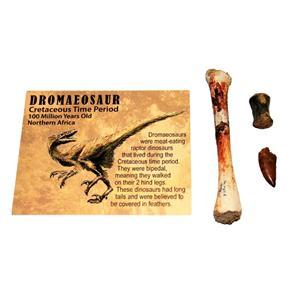 Dromaeosaur Raptor Dinosaur Tooth, Vertebra, & Fossil Bone #14878 6o