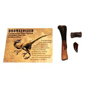 Dromaeosaur Raptor Dinosaur Tooth, Vertebra, & Fossil Bone #14880 6o