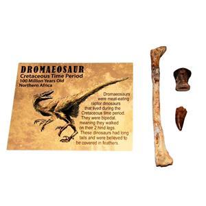 Dromaeosaur Raptor Dinosaur Tooth, Vertebra, & Fossil Bone #14881 6o