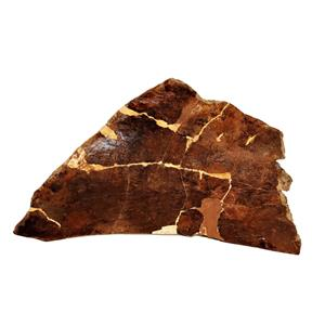 TRICERATOPS Dinosaur Frill (Headplate) Real Fossil 68 Mil Years Old #15086 116o