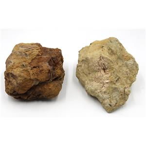 UNPREPARED TRICERATOPS Vertebraes Real Fossil 68 Million Years Old #15120 103o