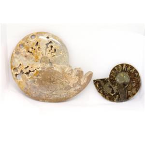 AMMONITE Fossils Lot of 2 (100-120 Mil Yrs old) Morocco & Madagascar #12375