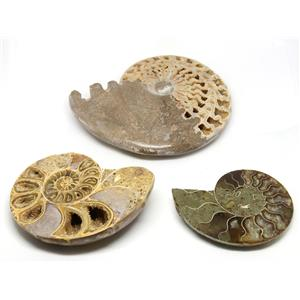 AMMONITE Fossils Lot of 3 (100-120 Mil Yrs old) Morocco & Madagascar #12390