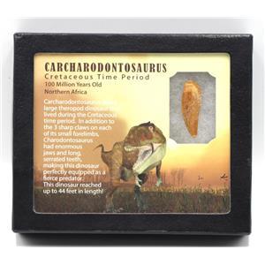"CARCHARODONTOSAURUS Dinosaur Tooth 1.467"" Fossil African T-Rex MDB #15380 14o"