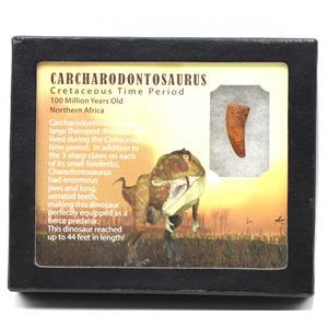 "CARCHARODONTOSAURUS Dinosaur Tooth 1.091"" Fossil African T-Rex MDB #15382 14o"