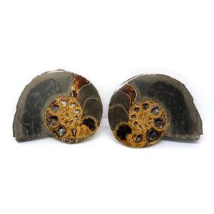 Ammonite Hoploscaphites Split Polished Fossil Montana 100 MYO w/label #16285 15o