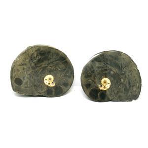 Ammonite Hoploscaphites Split Polished Fossil Montana 100 MYO w/label #16286 22o