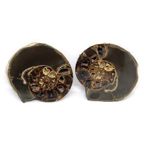 Ammonite Hoploscaphites Split Polished Fossil Montana 100 MYO w/label #16289 18o