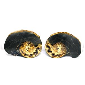 Ammonite Hoploscaphites Split Polished Fossil Montana 100 MYO w/label #16290 22o