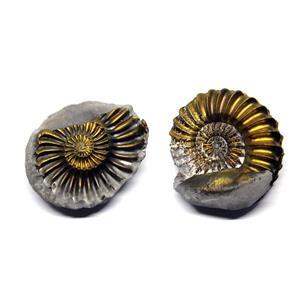 Ammonite Fossil Pleuroceras (Pyritized) Jurassic 185 MYO #16524 7o